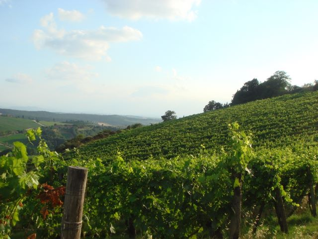 A view over the Tuscany Vineyards