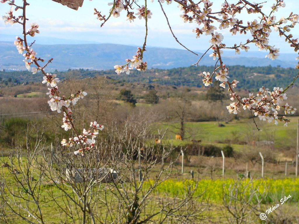 Águas Frias (Chaves) - ... as primeiras flores nas árvores ...