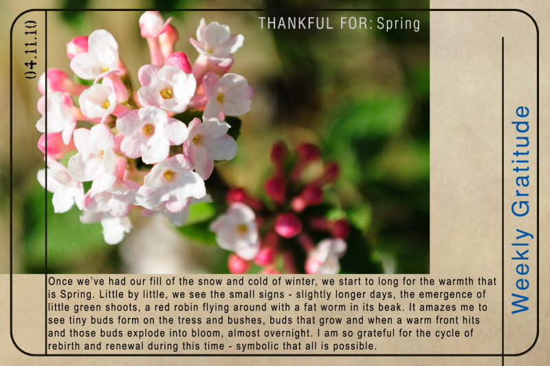 Weekly Gratitude - Spring