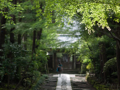Approach (kasa51) Tags: japan temple lumix f14 kamakura 85mm panasonic 鎌倉 扇ヶ谷 寿福寺 gf1 samyang fmount 幽玄 青もみじ