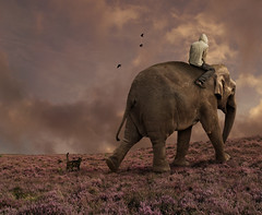 Elephant Dreams (Mattijn) Tags: elephant cat ride dream photomontage crows pino mattijn amersfoort magicrealism dierenparkamersfoort bookofdreams purplemoorgrass wanderingthepurplemoor