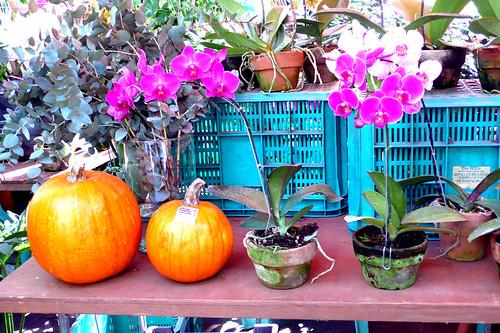salcedo market pumpkins 2