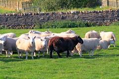 Every family has a black sheep somewhere!