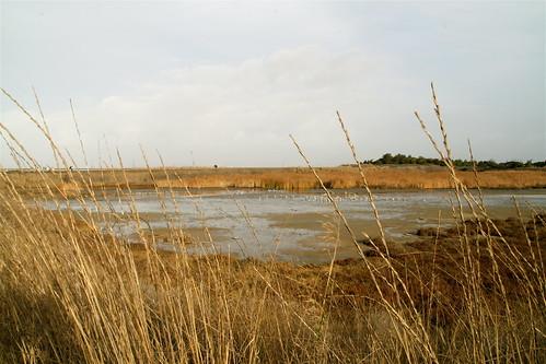 low tide in the baylands