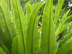 ortobotanico 318 (blum1) Tags: alberi fiori piante ortobotanico