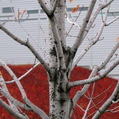 (fusion-of-horizons) Tags: autumn fall architecture campus de photography photo university fotografie photos cincinnati architect thom uc mayne morphosis thommayne arhitectura arhitect arhitectur universityofcincinnatirecreationcenter