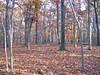 Lost Brook Preserve
