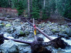Worksafe (Dru!) Tags: trees canada creek work log bc flood britishcolumbia yale frasercanyon undercut whereamiinbc walklog yalecreek watershedassessment terrainmapping rootwads landslidedebris