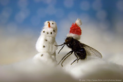 Merry Christmas Flickr! (ukaaa) Tags: santa christmas winter snow macro hat digital dead fly student snowman mr room gerald sonia kot notphotoshopped notalive