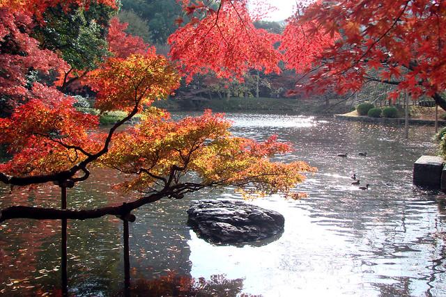 Autumn in Tokyo I