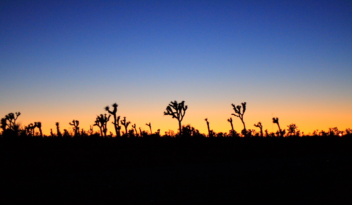 Twilight over Joshua Tree