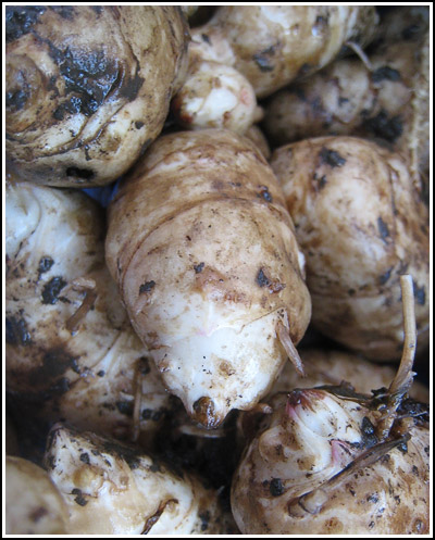 Jerusalem Artichokes copy