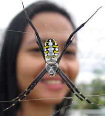 Spider & me (Sue323 :-)) Tags: macro nature cemetery psp spider maria philippines images bulacan sue soe luonto argiope laakso supershot amazingtalent meycauayan abigfave anawesomeshot canonpowershota710is teampilipinas betterthangood marialaakso sue323 flickrpilipinas88