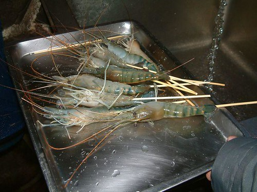 Our catch + sympathy shrimps.jpg