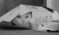 FRIDA (CABILUDAS!) Tags: bw cats blackwhite chats chat box gatos gato felinos felino boite noirblanc