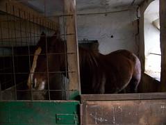 (!!!!!!!Photoholic!!!!!!!) Tags: birthday family famille horse animal cheval anniversaire parrain tonton