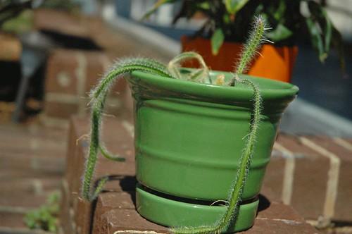 cactus-003