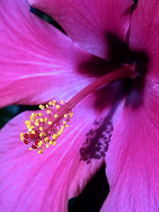 Photography - Pink Pollen by Nicholas M Vivian