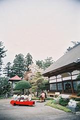 japanese tea ceremony (*Sensui*) Tags: garden temple spring vivitar cherrytree  japaneseteaceremony