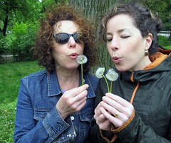 me mom dandelion
