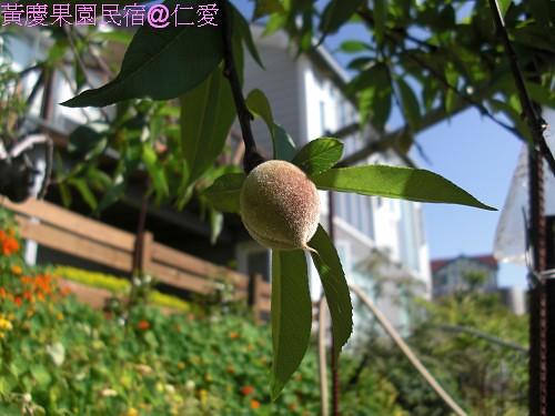 黃慶果園民宿CIMG2555