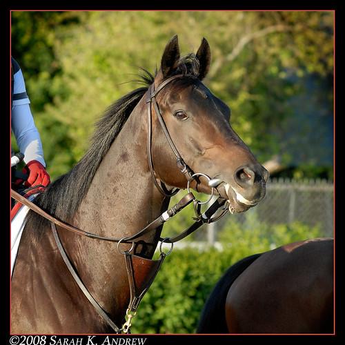 Phipps horse