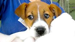 litter training a puppy puppy litterbox video