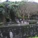 Taipei Zoo Pygmy Hippo