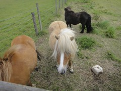 Ponies near to the cache