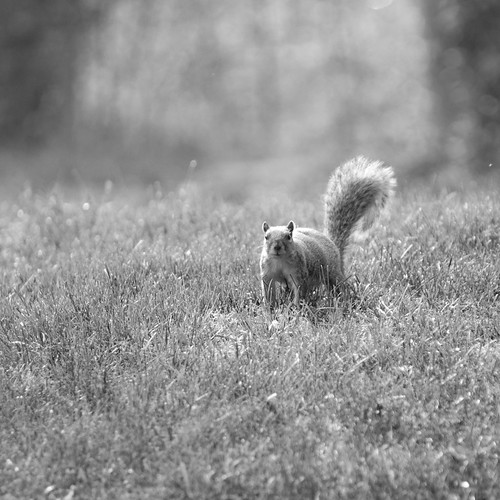 05-08-11 squirrel 5 by The Shutterbug Eye™
