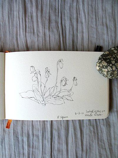 Squam Sketch_3