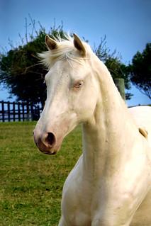 Horse - Blu com Céu Azul