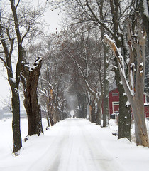 Avenue in wintertime (Per Ola Wiberg ~ Powi) Tags: trees winter snow vinter sweden excellent sverige february avenue sn shiningstar trd 2007 flymetothemoon februari musictomyeyes aclass naturegroup favoritephotos all finegold coolshot americaamerica ilovesnow supershot eker foreveryone favorites20 beautyisintheeyeofthebeholder theworldinmyeyes natureplus thethreeangels diamondheart flickrhearts amazingshots ekebyhovsalln flickrbronzeaward crystalawards freenature flickrelite ohthatsgood eperke flickrsun ~vivid~ exemplaryshotsflickrsbest betterthangood bestofautumnwinter2007 peaceawards visionaryartsgallery goldenplanet fabulousplanet visionaryartsgalleryplatinumgold naturesbeautifulpictures visionaryartsgalleryelite buildyourrainbowtransparent fireworksofphotos thenaturessoul chariotsofartists theelitephotographer natureskingdomawards soulophotography loveforphotography gaga4arts faszinationearthgroup wowfirstlevel