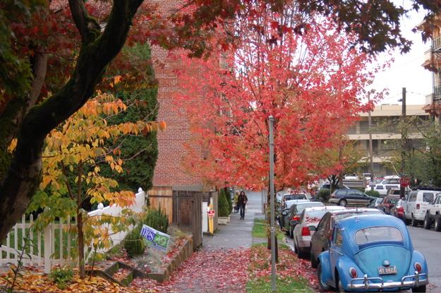 foliage_22ndpl_1