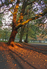 Natural light (Mr Grimesdale) Tags: sunlight tree liverpool sunrise dawn sony seftonpark merseyside capitalofculture mrgrimsdale stevewallace capitalofculture2008 liverpoolcapitalofculture2008 dsch2 europeancapitalofculture2008 liverpoolcapitalofculture mrgrimesdale grimesdale
