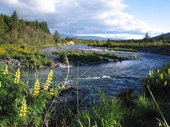 IMG_3919 (kenorrha) Tags: newzealand nznorthisland scenicsnotjustlandscapes