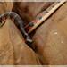 Memoria del Fuego.36 La Serpiente.
