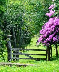 Paisagem rural (Jakza) Tags: paisagensrurais colégiomurialdo fazendasouzaporteira 3marias buganville bucólico rural turismo natureza flowers flores caxias nanaturezainnature challenge perpetual