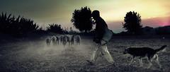 Way Back Home (Luis Montemayor) Tags: sunset sky dog clouds walking mexico atardecer bravo sheep shepherd perro cielo dust pastor malinalco myfavs caminando polvo ovejas estadodemexico