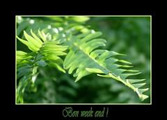 Bon week end ! (Suzanne Dugal) Tags: fab plant green nature plante photography perfect photographer vert passion excellent awards the fougre blueribbonwinner diamondclassphotographer flickrelite brillianteyejewel azofdigitalediting
