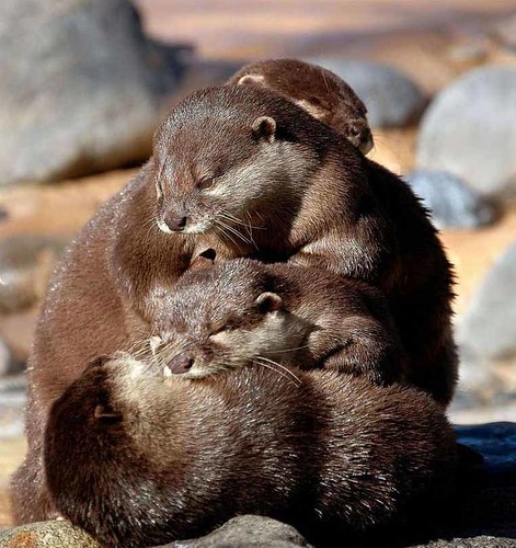 family huddle