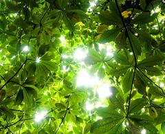 Amani Willett - Travel035 (amaniwillett) Tags: trees sunlight green nature leaves sunshine rainforest foliage jungle tropical caribbean whitelight dominica lightspots