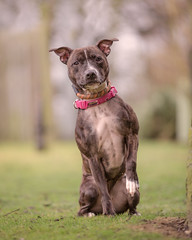 Brandy (3 of 3) (d3max) Tags: 5dmk3 canine canon charity dogs martinhillphotography rehoming rescue volunteering woodgreenanimalcharity
