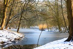 Winter / Hiver (tribsa2) Tags: nederlandvandaag marculescueugendreamsoflightportal bos forest foret