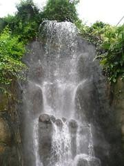 Waterfall, Eden Project (Newport Eye) Tags: waterfall rocks cornwall tourist foliage tropical fallingwater biomes theedenproject visitorattraction stblazey kaolinitepit