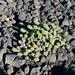 Piante che crescono tra le rocce e ceneri vulcaniche