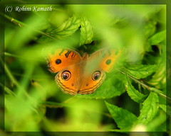 Butterfly-Peeking