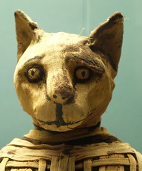 Mummified cat (Swamibu) Tags: london museum cat chat egypt histoire british soe bastet mummified antiquit gypte momie catgoddess shieldofexcellence tellbasta natronsalt