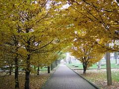 autunno (s.gianfranca) Tags: autumn colour foglie garden foliage autunno colori giardino absolutelystunningscapes