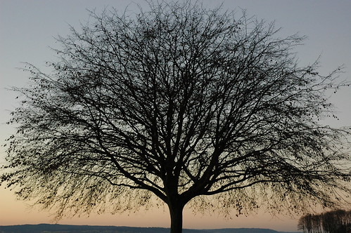 Tree on the beach. Golden Gardens Park, twilight, Seattle, Washington, USA